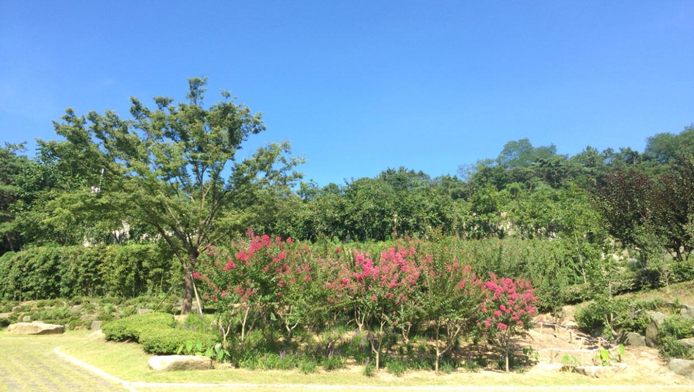 배롱나무꽃