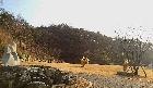 경관석,느티나무,억새