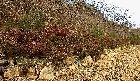 하천부 영산홍