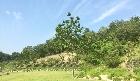 오동나무 주변 전경입니다