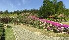 영산홍과 꽃잔디가 야영장을 화려하게 바꿔 놓았습니다