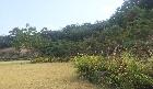 야외공연장 주변 산국