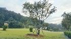 느티나무 주변